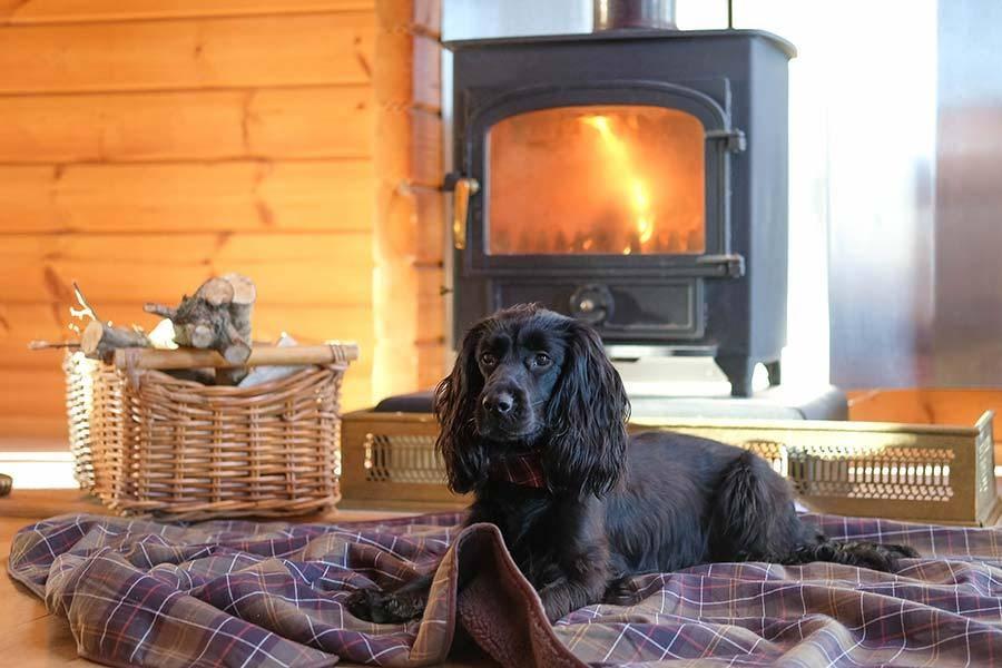dog-friendly-holidays