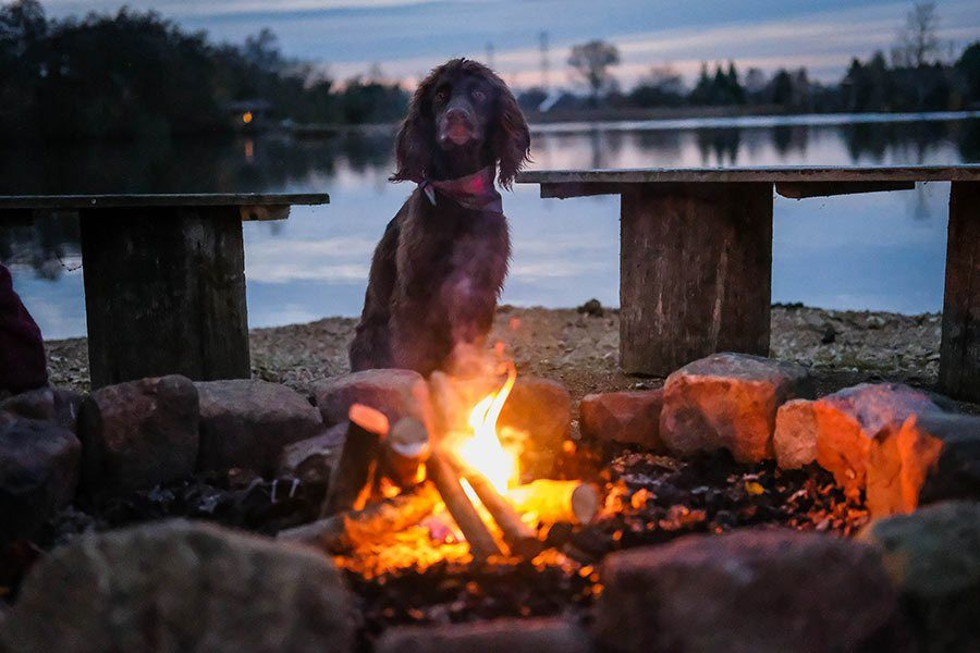 UK-dog-friendly-cabins