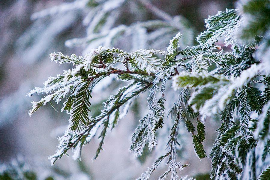 family-winter-holiday