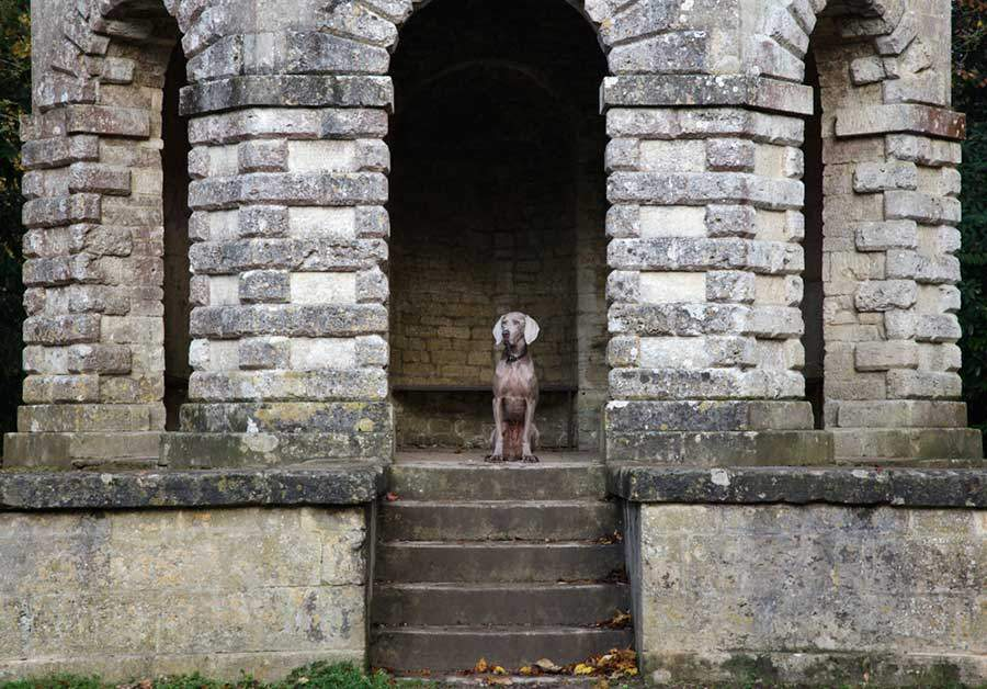 pet-friendly-days-out-cirencester