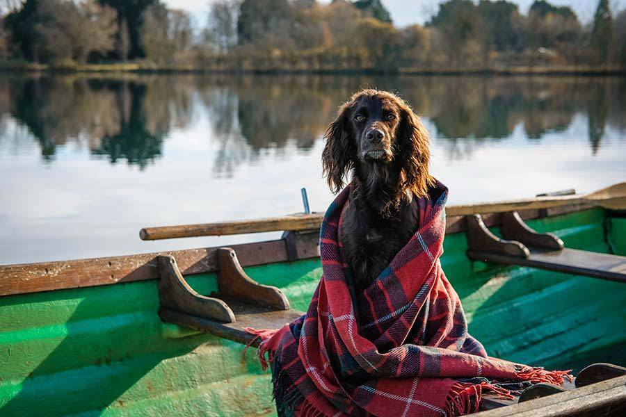 pet-friendly-log-cabins-for-holidays