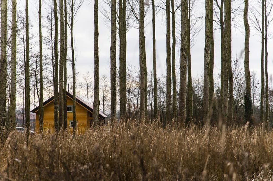 romantic-forest-holiday