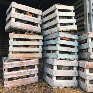 Log-Boxes